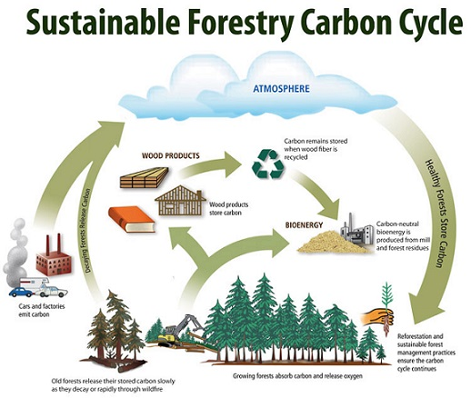 Hasil gambar untuk Carbon, Forestry and wood products