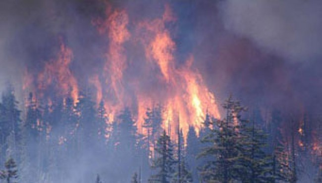 how can we prevent forest fires Yes, i know i have covered this broad topic before, but this time i want to focus on the main causes of forest fires and what we can all do to help prevent them.